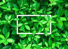 Top view of Creative layout made leaves Stock Photos