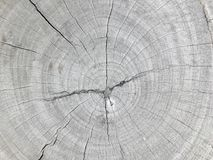 Cross section. Top view the cross section tree trunk with annual ring and crack of the tree Stock Images