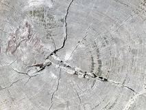 Destroy. Top view the cross section tree trunk with annual ring and crack of the tree stock images