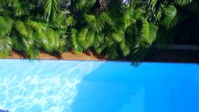 Top view of crystal clean water surface in swimming pool and palm trees, sun shine bright water-pool loop background stock video footage