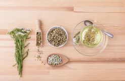 Yarrow tea Royalty Free Stock Photography