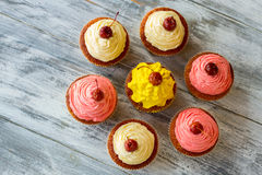 Top view of cupcakes. Royalty Free Stock Images