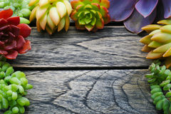 Top view cute colorful succulent plant with copy space for text on wooden table background. Top view cute colorful succulent plant flora with copy space for royalty free stock images