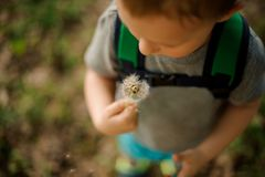 Cute little boy blowing a white dandelion in the garden. Top view of a cute little boy blowing a white dandelion walking in the garden Stock Photo