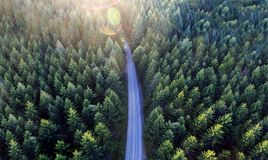 Top view of dark green forest landscape in winter. Aerial nature scene of pine trees and asphalt road stock photography
