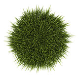 Top view of decorative grass isolated on white Royalty Free Stock Photo