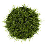 Top view of decorative grass in pot isolated on white Royalty Free Stock Photos