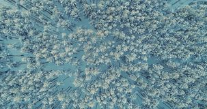 A top view on a deep forest with the trees covered in snow. 4K. A top view on a deep forest with the trees covered in snow stock footage
