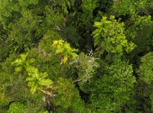 Top View of Dense Rainforest. Thick Tropical Rainforest. Green Palm Trees. stock photo