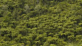 Top View of Dense Tropical Forest. Green Palm Trees. royalty free stock photos