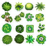 Top view of different kind of plants Stock Photos