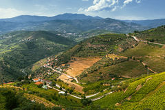 Top view of Douro Valley, vineyards are on a hills. Royalty Free Stock Photography