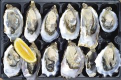 Top view of a dozen fresh oysters with lemon wedge Royalty Free Stock Image