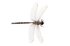 Top view dragon fly royalty free stock images