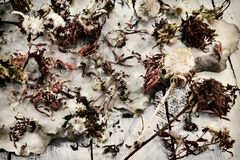 Top view of dried aster flowers and seeds on old paper background and planks stock photography