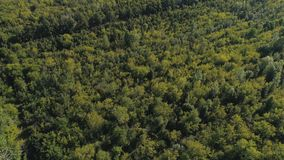 Top view from the drone to the forest. stock video footage