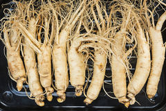 Top view of Dry Ginseng Roots. Royalty Free Stock Photo