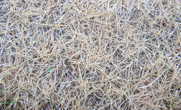 Top view of dry grass Stock Images