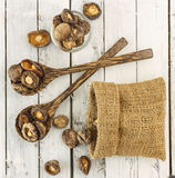 Top view of dry  shiitake mushrooms on white wood Royalty Free Stock Photo