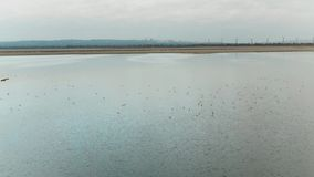 Top view of ducks floating on lake. Shot. Wild flock of ducks swims on lake in cloudy weather. Panoramic view of ducks stock footage