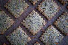 Top View of Earl Grey Tea Cookies on Parchment. Top view of three rows of earl grey tea cookies on parchment paper Stock Images