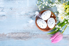 Top view of easter eggs in a nest. Spring flowers and feathers over blue rustic wood background. Stock Photography