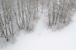 Top view of the edge of a snowy forest Stock Photo