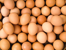 Top view of egg Stock Images