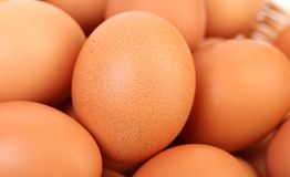 Top view of egg Stock Photography