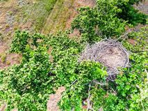 Top view of empty nest on green tree in steppe. Top view of a nest without eggs on green tree in Russian steppe royalty free stock image