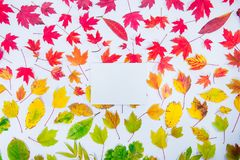 Top view empty rectangular canvas blank on autumn leaves gradient colorful rainbow background on white. Leaf pattern fall colors f. Lat lay. Seasonal backdrop stock photo