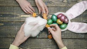 Top view of the family`s hands that feed Easter hare on wooden table. Happy easter. Happy family are preparing for. Easter. Easter eggs on wooden background stock video