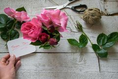Top view of female decorator holding royalty free stock images