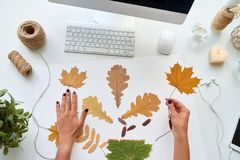 Designer Making Autumn Decorations. Top view of female hands holding autumn leaves over modern desk while choosing pattern for designer decoration Stock Images