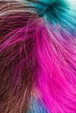 Top view of female multicolored dyed hairs royalty free stock photography