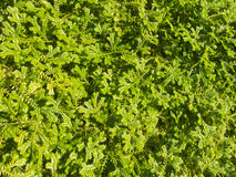 Top view of fern Stock Photo
