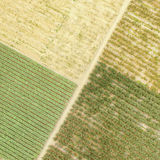 Top view fields plantations Stock Images