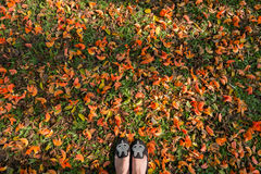 Top view. Flat Shoes on Bastard Teak ground in morning light. Copy space Stock Image