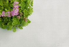 Top view of flower bouquet. Small flower arrangement on a white tablecloth Stock Image