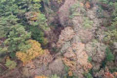Forest color changing in autumn Stock Images