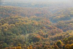 forest in the fall with haze Stock Image