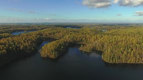 Top view of the forest and the river. Autumn forest and river from the top stock video