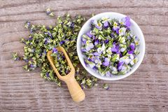 Small, violet heartsease. Top view of Fresh and dried flowers from field pansy on a wooden background Stock Photography