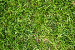 Top view of fresh  green grass with sunlight on ground in public park for background royalty free stock image