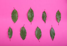 Top view of fresh and green leaves on a bright pink background. Close-up picture of raw plants. Freshness and summer concept. Stock Images