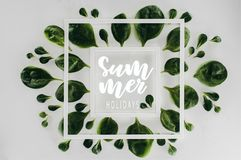 Top view of fresh green leaves and white square frames with words summer holidays. On grey royalty free stock photography