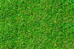 Top view of fresh lawn grass Royalty Free Stock Photo