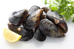 Top view of fresh mussels Stock Image