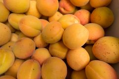 Top view of fresh orange apricots. Top view of ripe fresh orange apricots Royalty Free Stock Photography