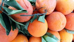 Top view of fresh oranges with leaves in spanish Stock Images